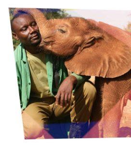 David Shreck Wildlife Foundation